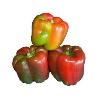 Capsicum Mixed Colour (Red/Green) each