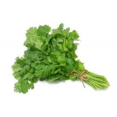 Herbs Coriander bunch