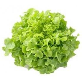Lettuce Green Oak each local SPECIAL