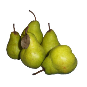 Pears Packham kg SPECIAL