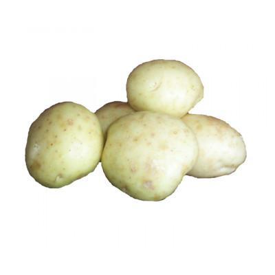 Potatoes White Medium Washed Kg
